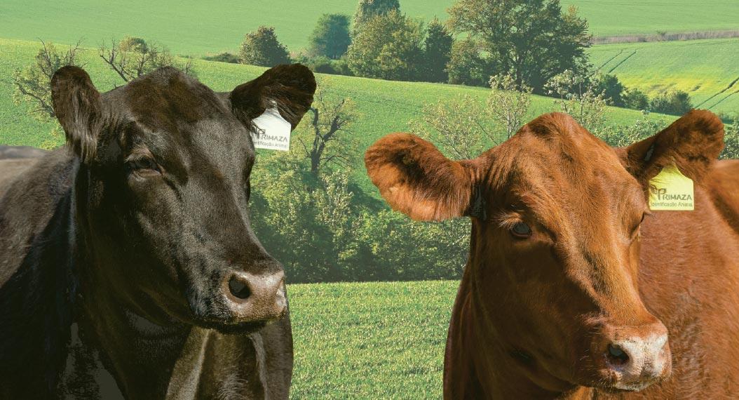 Bastões Eletrônicos: Como fazer a Gestão da Pecuária com Tecnologia